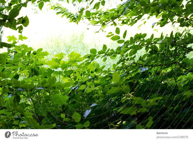 es grünt Natur Baum Sommer Blatt Wald Umwelt Frühling Hintergrundbild leer viele