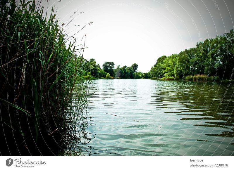 am see See Schilfrohr Wasser Sommer Frühling Menschenleer Panorama (Aussicht) Panorama (Bildformat) Natur Außenaufnahme Himmel grün Wasseroberfläche