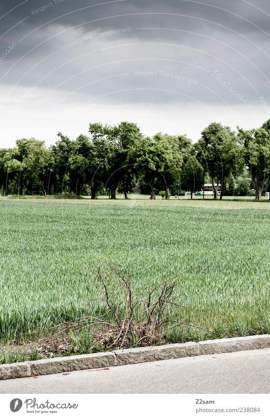 jetzt aber schnell heim Umwelt Natur Landschaft Himmel Gewitterwolken Sommer schlechtes Wetter Baum Gras Sträucher Feld Wald bedrohlich dunkel Endzeitstimmung