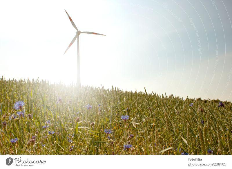 mehr wind! Himmel Natur Sonne Sommer Umwelt Landschaft Gras Wind Feld Klima Energiewirtschaft Zukunft Wandel & Veränderung Idylle Schönes Wetter