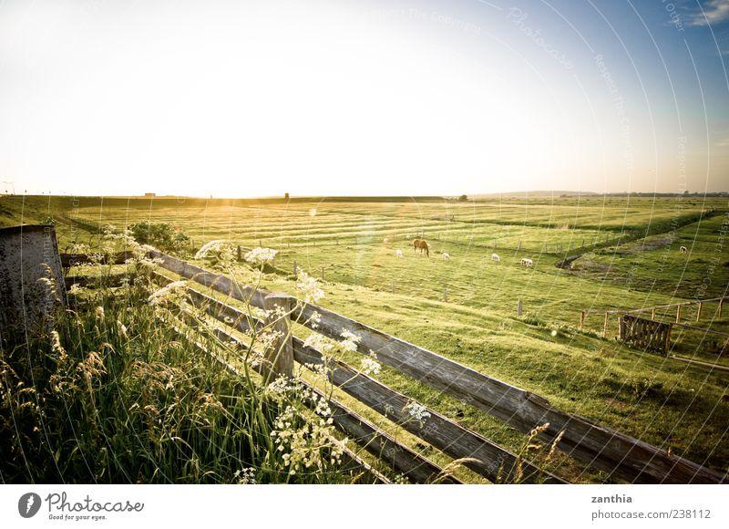 Deich Natur Ferien & Urlaub & Reisen ruhig Erholung Umwelt Landschaft Wiese Gras Stimmung Horizont Deutschland Tourismus Sträucher Pferd Idylle Schönes Wetter