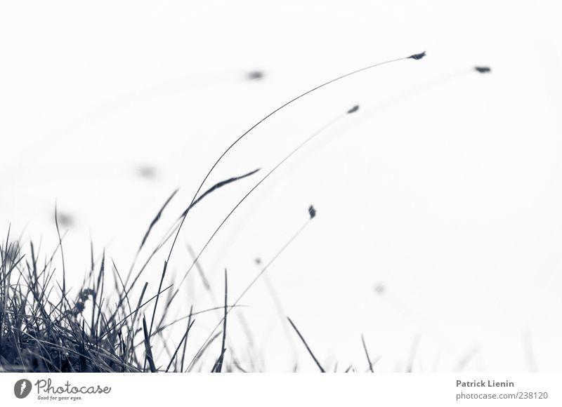 Windspiel Leben Tanzen Natur Pflanze Sturm Gras Blüte Bewegung grau Halm Biegung biegen Dynamik Neigung beruhigend buschig Stabilität elastisch widersetzen