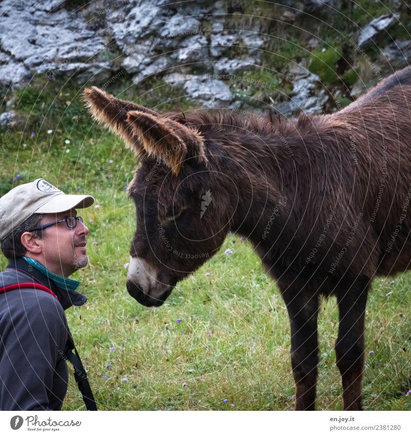 schau mir in die Augen Mensch Ferien & Urlaub & Reisen Mann Tier Erwachsene Wiese Tourismus Freundschaft Kommunizieren Fröhlichkeit Lebensfreude beobachten
