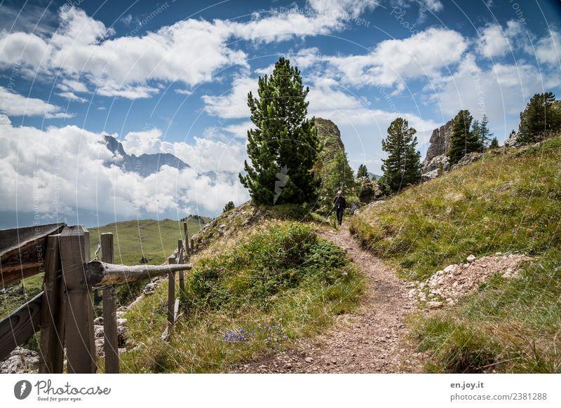 erholsam Mensch Himmel Natur Ferien & Urlaub & Reisen Mann Sommer Landschaft Baum Wolken Ferne Berge u. Gebirge Erwachsene Leben Wege & Pfade Wiese Tourismus