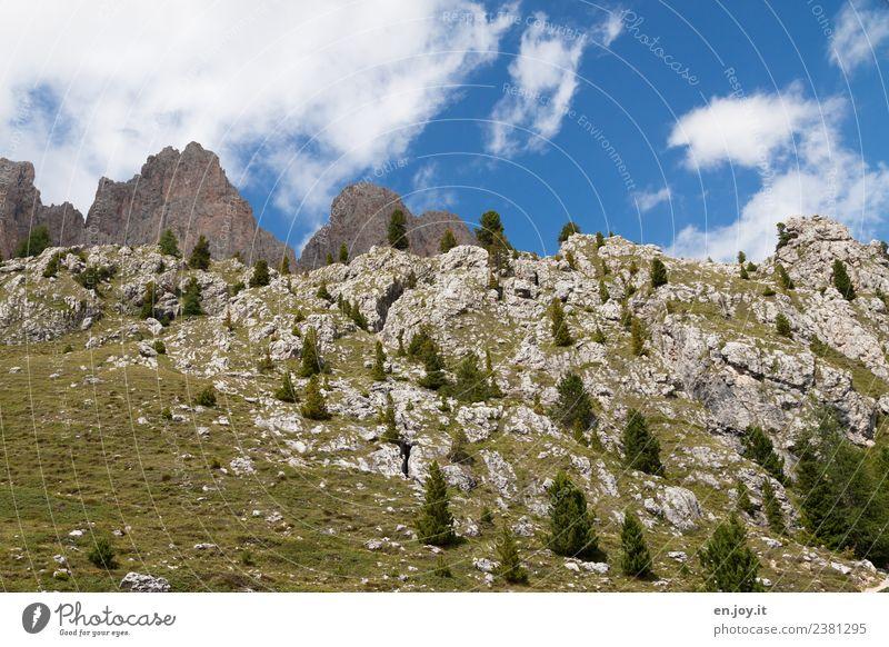 felsig Ferien & Urlaub & Reisen Ausflug Berge u. Gebirge wandern Umwelt Natur Pflanze Himmel Tanne Nadelbaum Fichte Wiese Felsen Alpen Dolomiten Gipfel Südtirol
