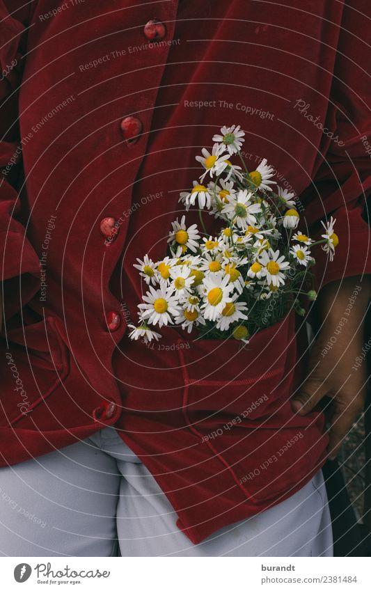 Samt und Kamille Allergie 1 Mensch 18-30 Jahre Jugendliche Erwachsene Natur Pflanze Blume Kamillenblüten Mode samtig Jacke Hose Rollstuhl sitzen ästhetisch