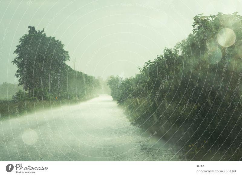 Im Regen Umwelt Natur Urelemente Himmel Klima Wetter schlechtes Wetter Unwetter Baum Straße Wege & Pfade authentisch nass Einsamkeit Farbfoto Außenaufnahme