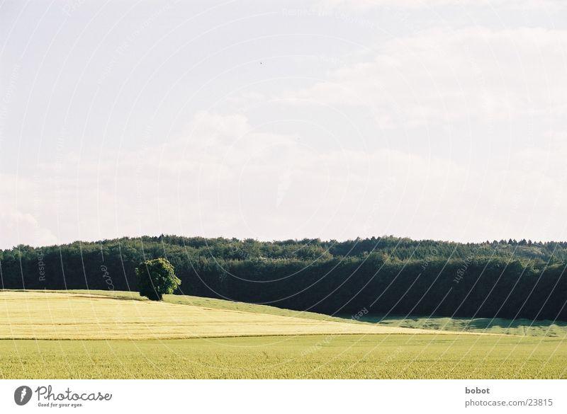 Landleben Feld Wald Baum Landwirtschaft Himmel