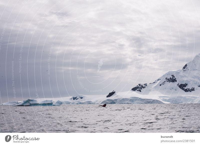 kein Fisch II Natur Landschaft Wolken Klima Klimawandel Eis Frost Schnee Berge u. Gebirge Antarktische Halbinsel Gipfel Schneebedeckte Gipfel Gletscher Meer