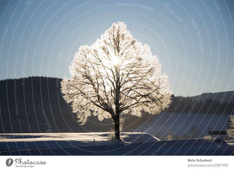 Lebensbaum Natur Pflanze Tier Urelemente Winter Eis Frost Schnee Baum Hügel Berge u. Gebirge Allgäu Zeichen Gefühle Glück Zufriedenheit Lebensfreude Kraft schön