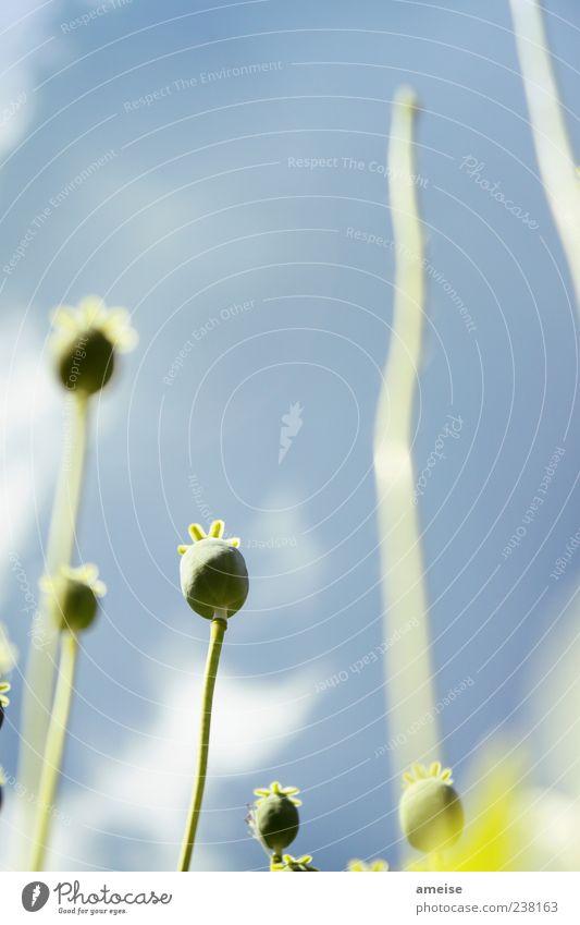 Ohne Titel Himmel Natur schön Pflanze Sommer Blume Wolken Frühling Blüte ästhetisch Schönes Wetter einfach Blühend Stengel vertikal Blütenknospen