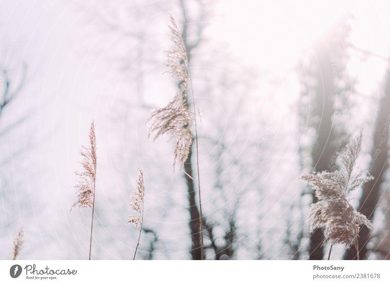 hello morning sun Natur Sonne Sonnenlicht Wald natürlich braun grau Gedeckte Farben Außenaufnahme Menschenleer Textfreiraum links Textfreiraum rechts Morgen