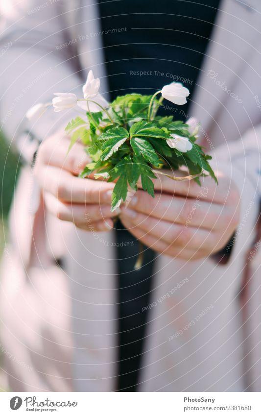 Etwas Frühling maskulin Hand Finger 1 Mensch Natur Pflanze Blume Blüte einfach hell grün rosa schwarz weiß Farbfoto Außenaufnahme Textfreiraum unten Schatten