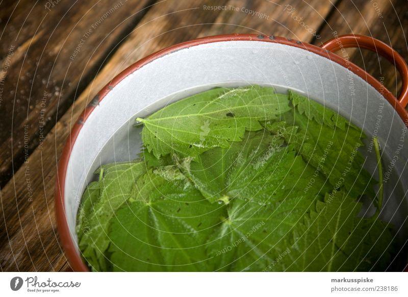 brennesseltee grün Pflanze Leben Lebensmittel Blüte Gesundheit Getränk Reinigen trinken Blühend Kräuter & Gewürze Tee Tasse Duft Holzbrett Topf