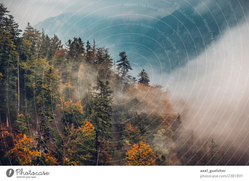 Foggy Mountain Woods Ausflug Abenteuer Freiheit Expedition Camping wandern Umwelt Natur Landschaft Pflanze Herbst Wetter Nebel Baum Wald Berge u. Gebirge Gipfel