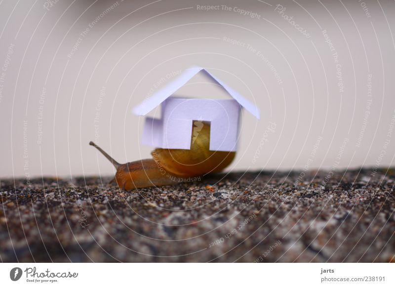 schneckenhaus Haus Einfamilienhaus Tier Wildtier Schnecke 1 tragen Häusliches Leben Farbfoto Außenaufnahme Nahaufnahme Menschenleer Textfreiraum links