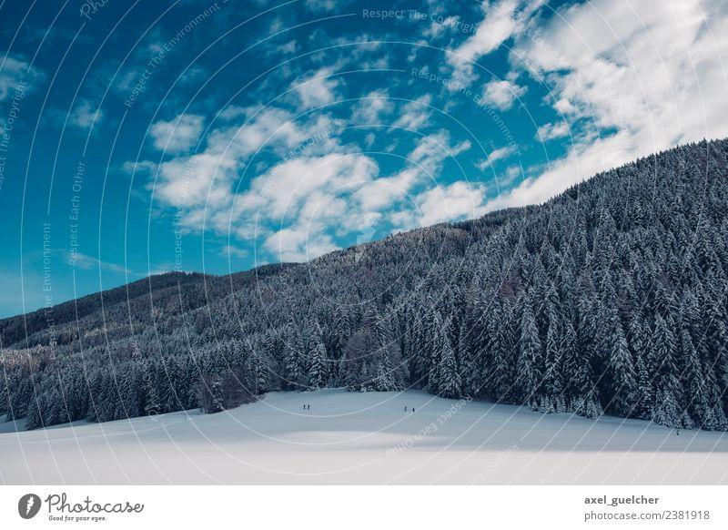 White Woods Natur Landschaft Pflanze Himmel Wolken Winter Schönes Wetter Eis Frost Wald Hügel Schneebedeckte Gipfel Kraft Hoffnung Abenteuer Erholung erleben