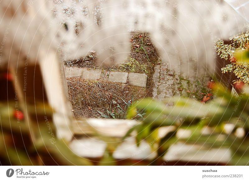 ausblick Pflanze Fenster kalt Gefühle Garten Stimmung beobachten Gardine spionieren Fensterblick Fensterrahmen Topfpflanze Schutz Gartenweg