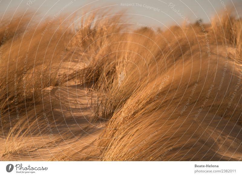Stürmische Zeiten Natur Pflanze schön Landschaft Strand Umwelt Wege & Pfade natürlich Küste Bewegung außergewöhnlich wild gold ästhetisch Wind Sträucher