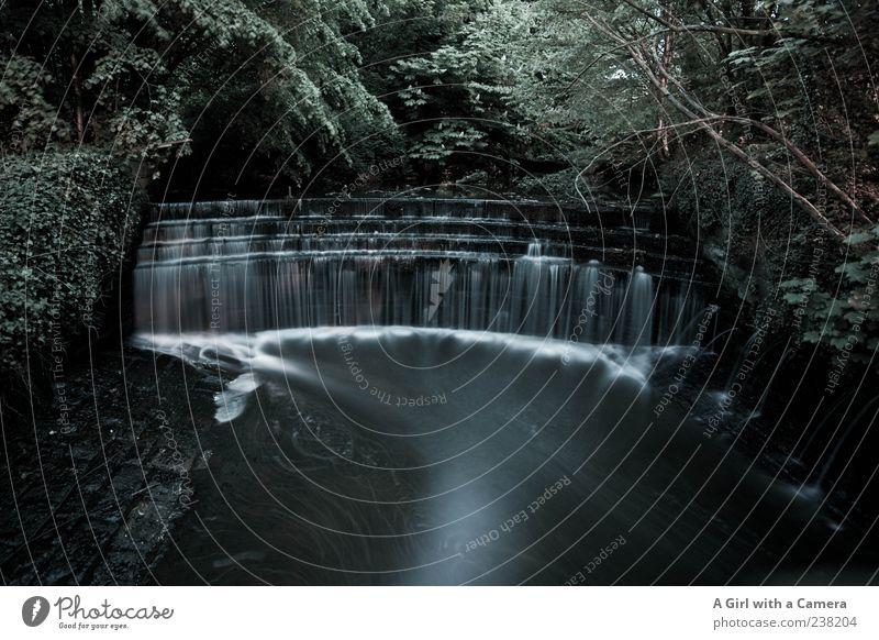 da hat was gefehlt Natur Wasser Wassertropfen Baum Fluss Wasserfall außergewöhnlich dunkel wild schwarz England fließen Tropfen verraucht Nebel fallen