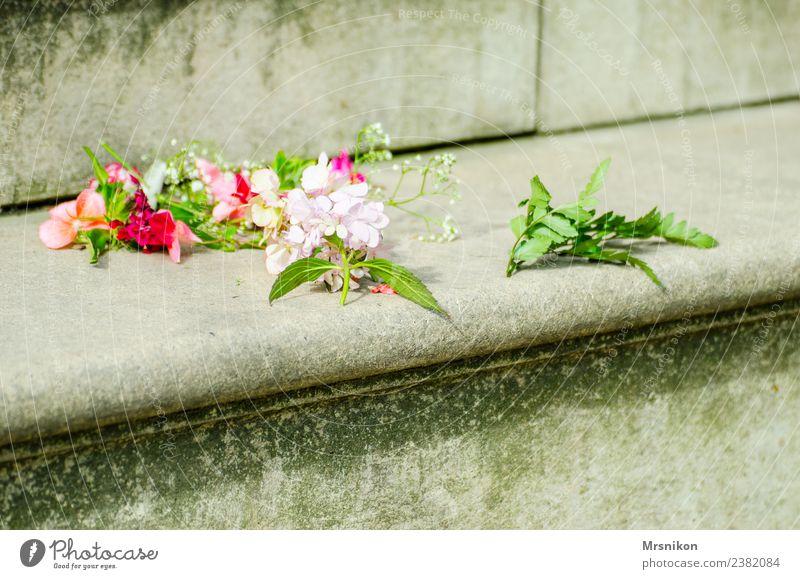 Hochzeit Pflanze grün Blatt Liebe Blüte Gefühle Glück Feste & Feiern Mauer zart Verliebtheit exotisch Blütenknospen Blütenblatt Valentinstag