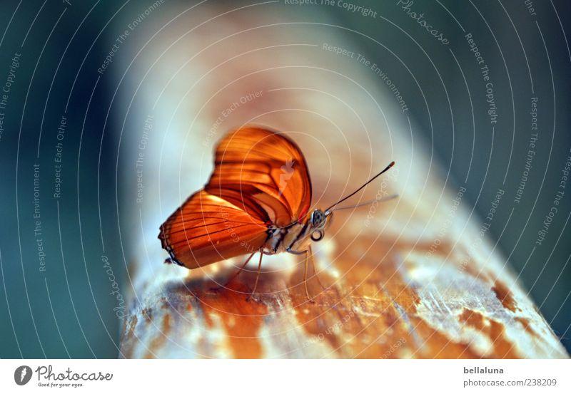 orange Natur Tier Sommer Schönes Wetter Wildtier Schmetterling Flügel 1 sitzen ästhetisch außergewöhnlich einfach elegant exotisch fantastisch frei schön