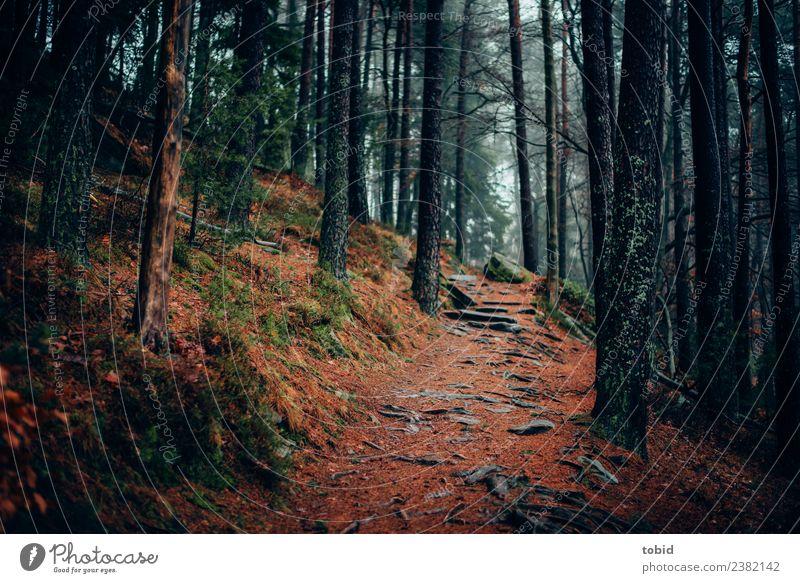 Waldweg Natur Landschaft Pflanze Urelemente schlechtes Wetter Nebel Baum Gras Sträucher Moos Hügel Felsen bedrohlich dunkel Einsamkeit einzigartig Wege & Pfade
