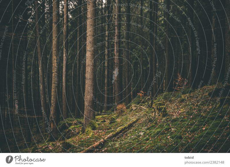 Wald Natur Landschaft Pflanze Baum Moos Hügel bedrohlich dunkel Einsamkeit einzigartig Idylle Baumstamm verwildert vermodern Farbfoto Gedeckte Farben