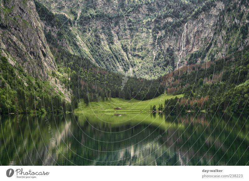 Spiegelwelt Königssee II Natur Landschaft Pflanze Wasser Sommer Schönes Wetter Baum Gras Hügel Felsen Alpen Berge u. Gebirge bedrohlich blau braun grün Felswand