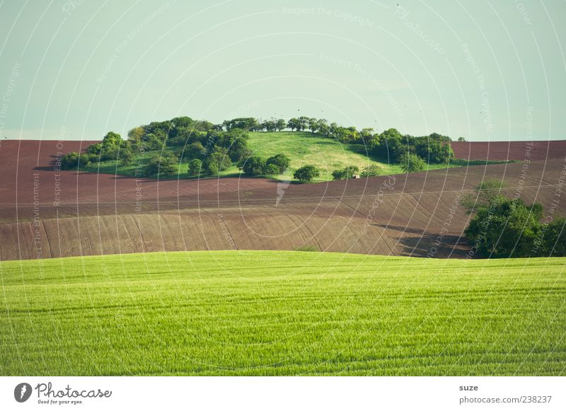 Oase Himmel Natur grün Baum Sommer Ferne Umwelt Landschaft Wiese Gras Horizont braun Erde Feld Klima Insel