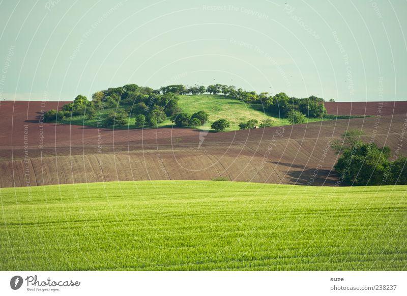 Oase Insel Landwirtschaft Forstwirtschaft Umwelt Natur Landschaft Urelemente Erde Himmel Wolkenloser Himmel Horizont Sommer Klima Schönes Wetter Baum Gras