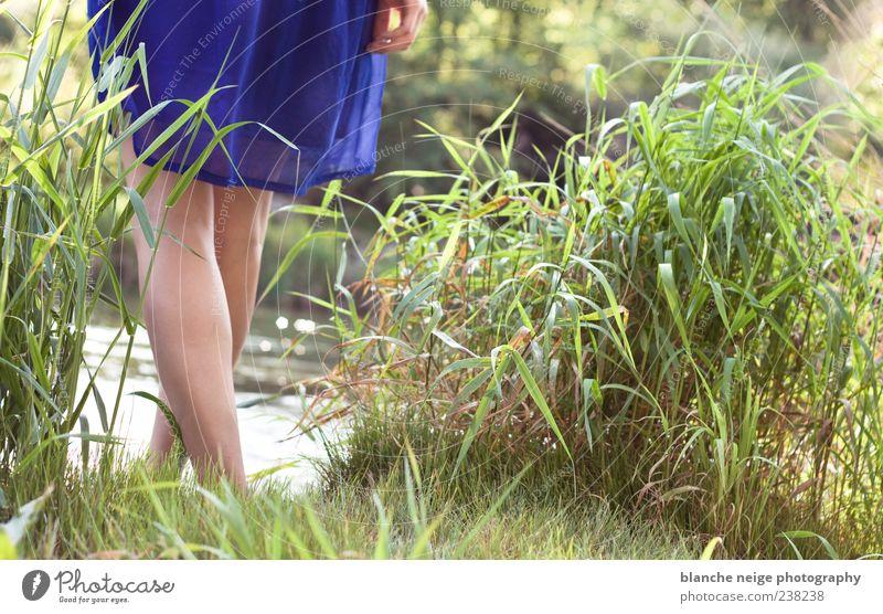 blau machen feminin Junge Frau Jugendliche Erwachsene Beine 1 Mensch 18-30 Jahre Wasser Sonne Sommer Gras Sträucher Wildpflanze Flussufer Kleid genießen hängen