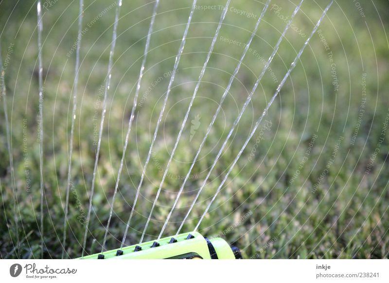 extrem schneller Fokus... ;-) Rasensprenger Frühling Sommer Schönes Wetter Dürre Gras Wiese Wasser nass sprengen gießen Wasserstrahl Farbfoto Außenaufnahme