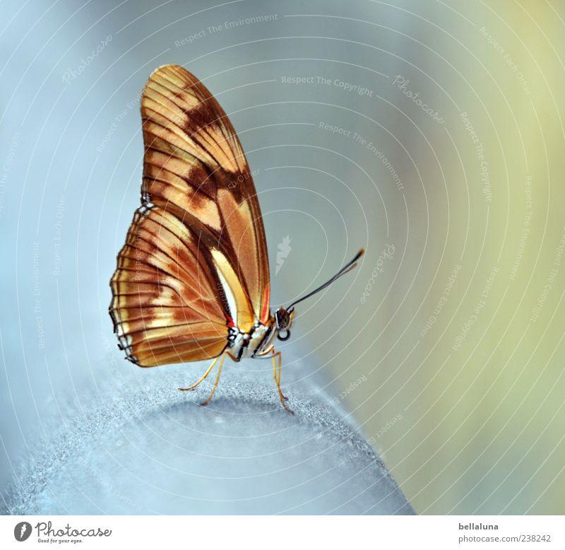 Ich hab die Flügel schön! Natur Sommer Tier grau Metall braun orange Wildtier außergewöhnlich elegant sitzen natürlich frei ästhetisch authentisch