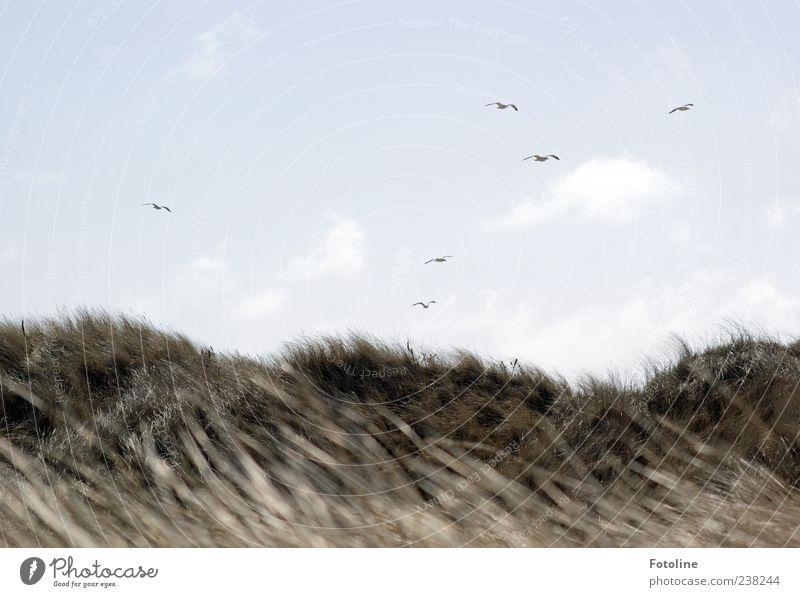 Spiekeroog | Vögel über Spiekeroog Umwelt Natur Landschaft Pflanze Tier Himmel Wolken Wind Gras Küste Strand Nordsee Insel Wildtier Vogel Schwarm hell natürlich