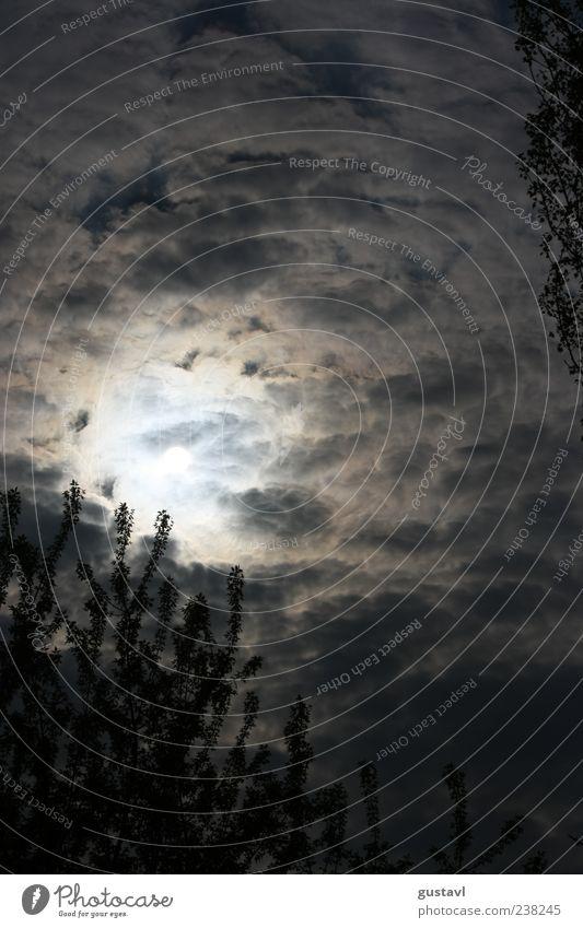 Bedeckt Umwelt Natur Luft Himmel Sonne Sommer Wetter Pflanze Baum ästhetisch hell schön Schwarzweißfoto Außenaufnahme Menschenleer Tag Licht Gegenlicht