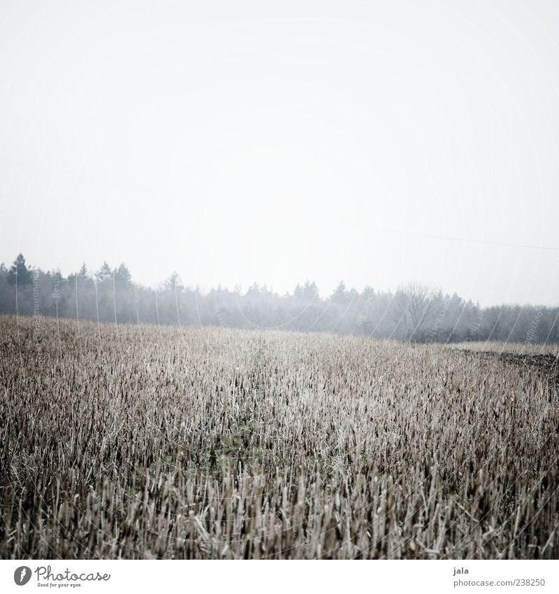 feld Natur Landschaft Pflanze Himmel Winter schlechtes Wetter Nebel Baum Gras Feld Wald kalt trist Farbfoto Gedeckte Farben Außenaufnahme Menschenleer