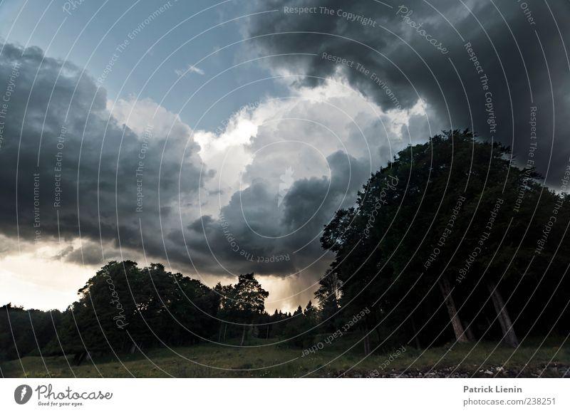 Donnerwetter Himmel Natur Wasser Baum Wolken Wald Umwelt Landschaft dunkel Wiese Luft Regen Wetter Wind Angst Klima