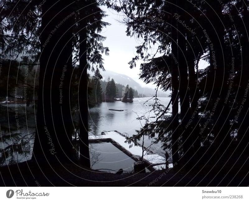 Winter at the lake Natur Wasser Ferien & Urlaub & Reisen Baum Pflanze Einsamkeit Wald Ferne Erholung Landschaft dunkel Schnee Berge u. Gebirge Freiheit See