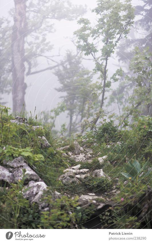 Märchenwelt Umwelt Natur Landschaft Pflanze Urelemente Klima Wetter schlechtes Wetter Wind Nebel Baum Blume Urwald Hügel Felsen Berge u. Gebirge nass wild