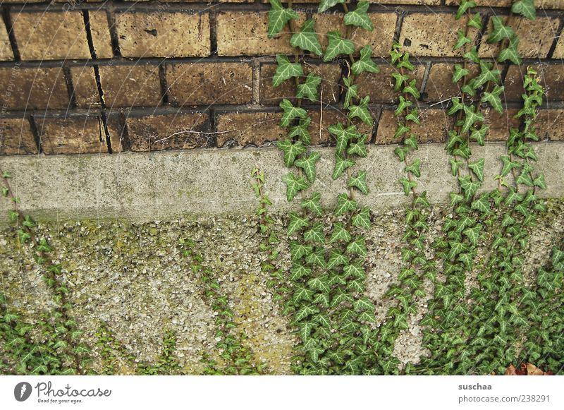 ränkespiele .. grün Wand Stein Mauer Gebäude Fassade Beton Wachstum Efeu Ranke Backsteinwand Kletterpflanzen