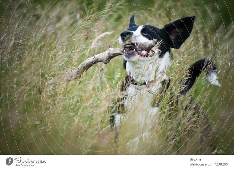 Grashüpfer Hund Natur Pflanze Freude Tier Umwelt Landschaft Wiese Spielen springen wild laufen natürlich Fröhlichkeit Ast