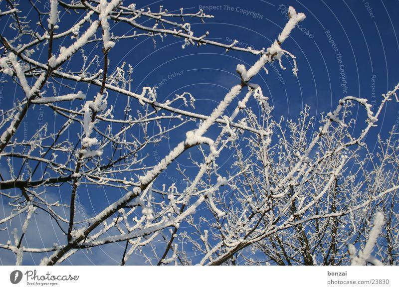 Eisbaum Baum Winter Schnee blau Himmel Zweig