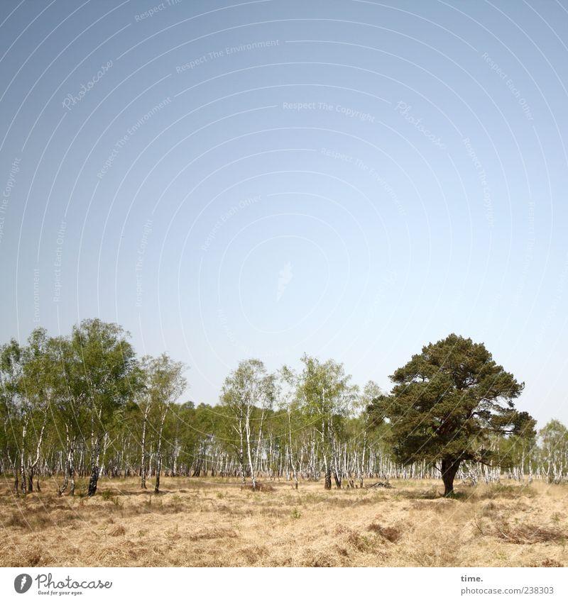 Quereinsteiger Himmel Natur Pflanze grün Baum Landschaft Wald Umwelt gelb Gras außergewöhnlich Kommunizieren Vergänglichkeit Wandel & Veränderung einzigartig Partnerschaft