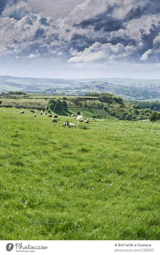 all things green and beautiful Natur Landschaft Himmel Wolken Gewitterwolken Frühling Wetter Gras Hügel außergewöhnlich natürlich grau grün Horizont Derbyshire