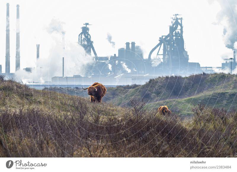 Fortschritt Zukunft Industrie Umwelt Natur Landschaft Klima Klimawandel kalt stark blau braun Gedeckte Farben Außenaufnahme Morgen Tag Totale Tierporträt