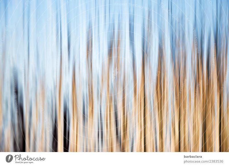 abstrakte Gestalten Fenster Tür Glas Linie blau gold Bewegung bizarr Kreativität Kunst Sinnesorgane Farbfoto Innenaufnahme Detailaufnahme Experiment Muster