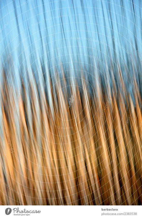 bewegtes Licht Glas Linie leuchten blau gold Bewegung Farbe Kunst Sinnesorgane Farbfoto Innenaufnahme Detailaufnahme Experiment abstrakt Muster