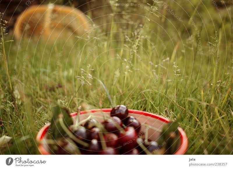 nachbars garten Natur Pflanze rot Sommer Wiese Lebensmittel Gras Garten Frucht liegen lecker Schalen & Schüsseln Kirsche Steinfrüchte gepflückt