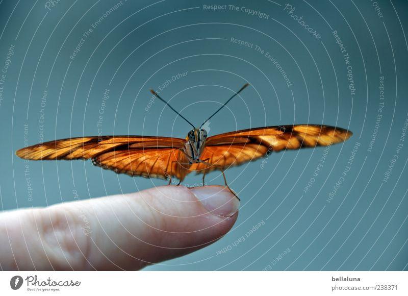 *200* Flügelschläge Natur blau schön Tier grau außergewöhnlich braun orange elegant sitzen Wildtier frei ästhetisch Finger fantastisch